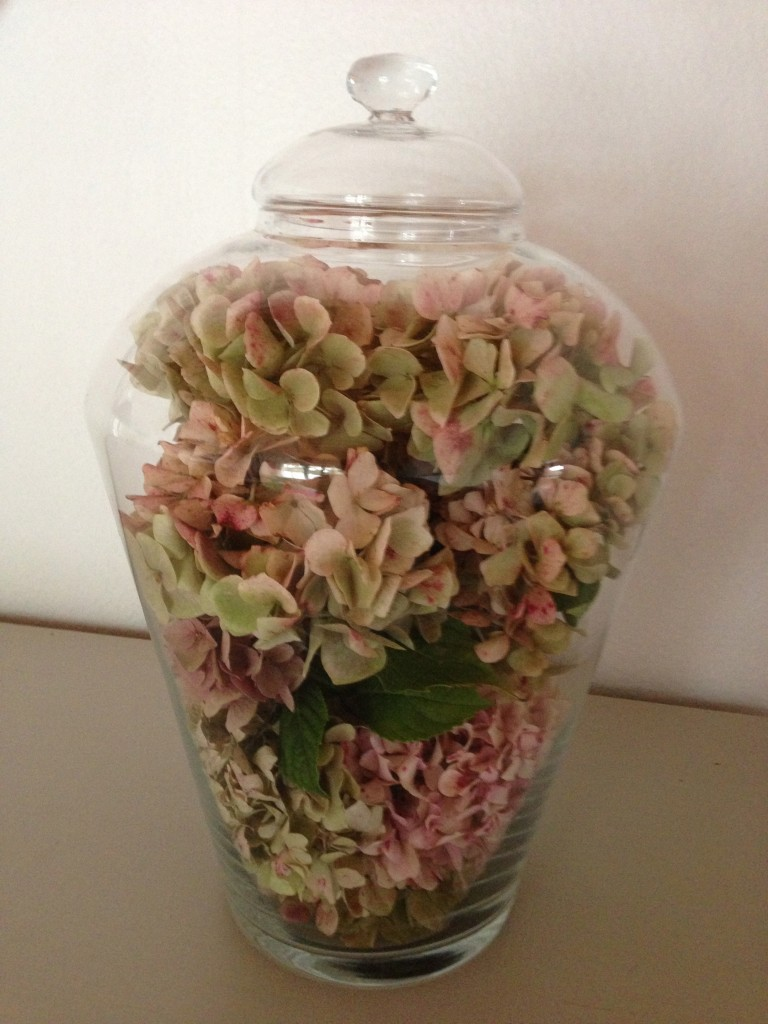 hortensias en bocal