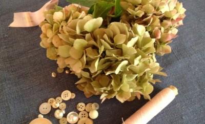 hortensia en boutons