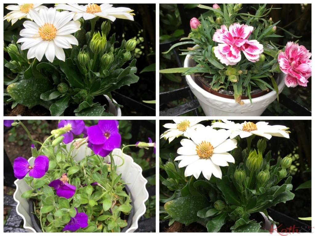 4 pots de fleurs