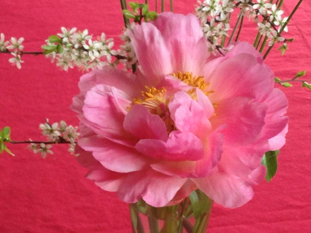 fleur rose sur nappe rose