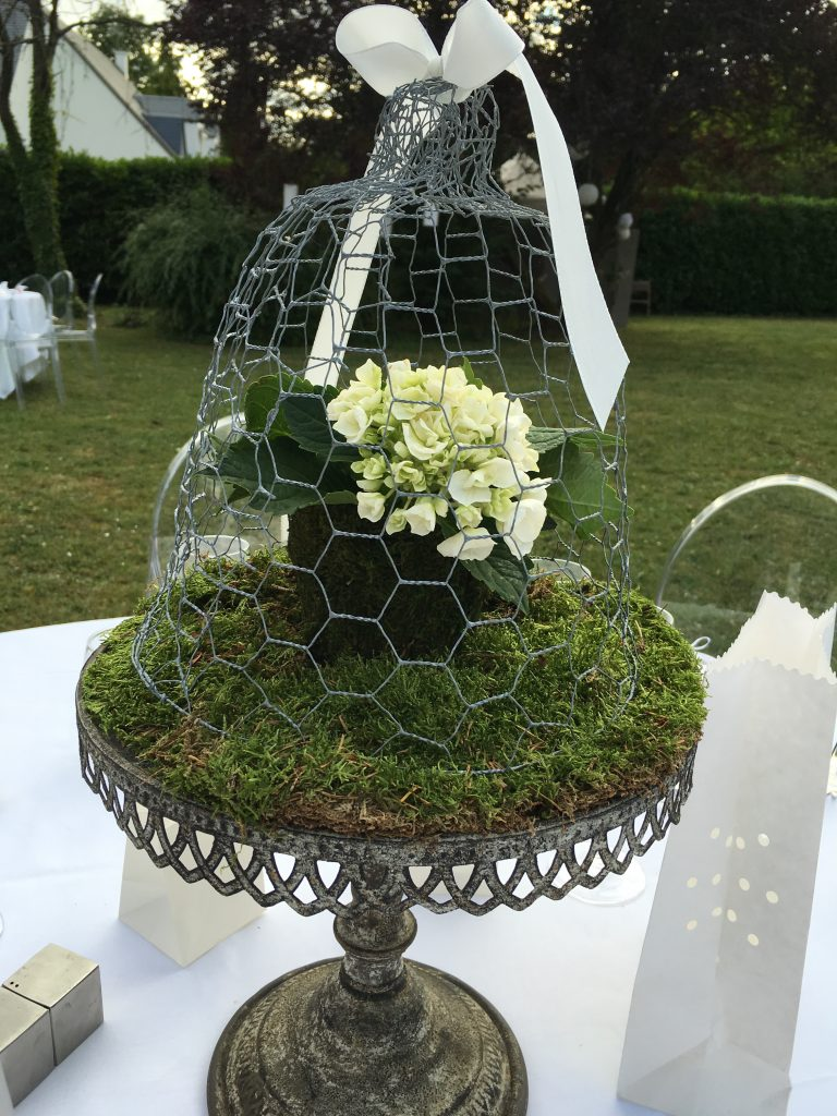 hortensia blanc sous cloche