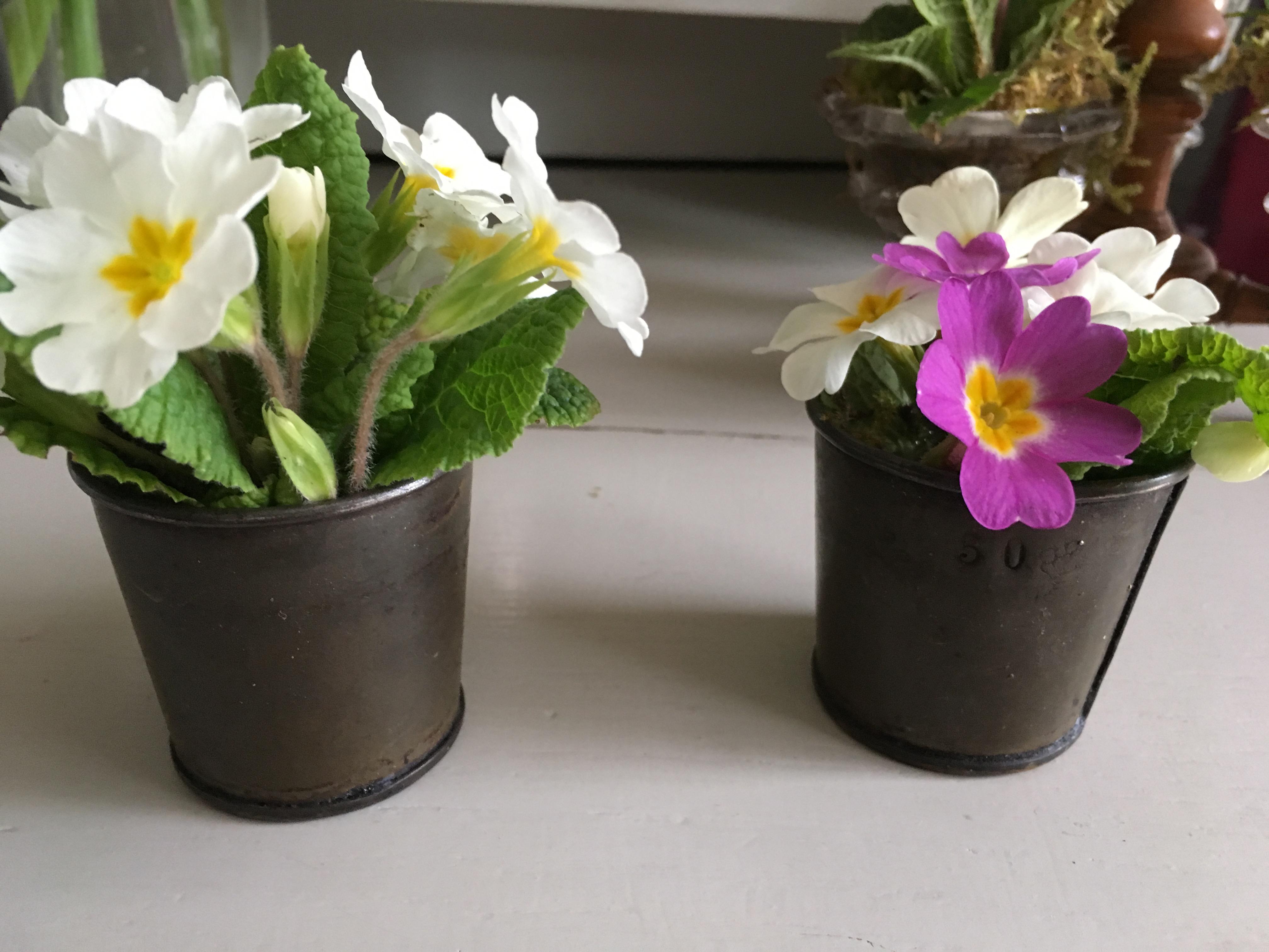 mesures et fleurs