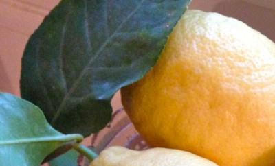 branche de citrons