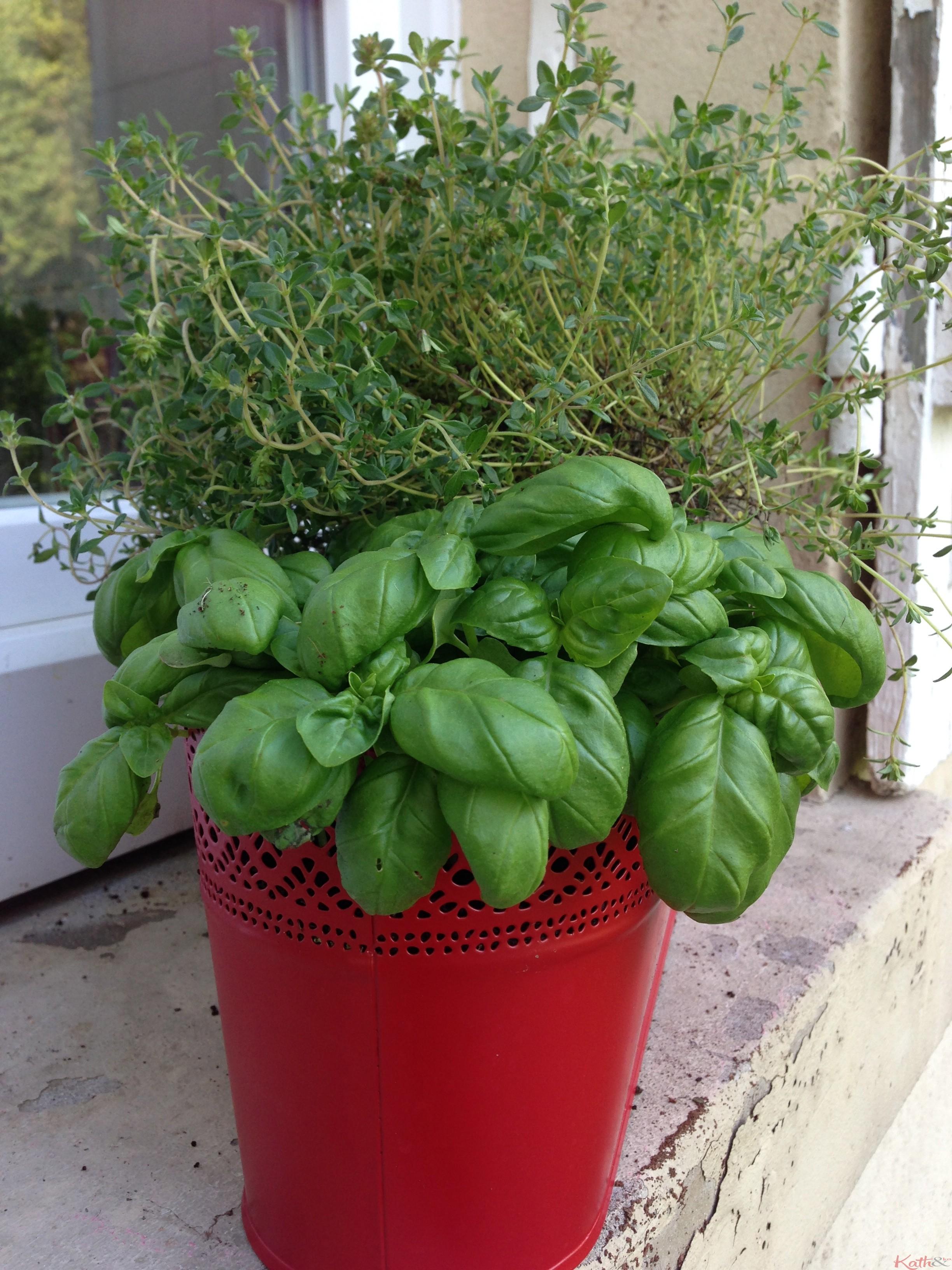 Jardinière À Suspendre Ikea esprit de jardin - kath-n-ko