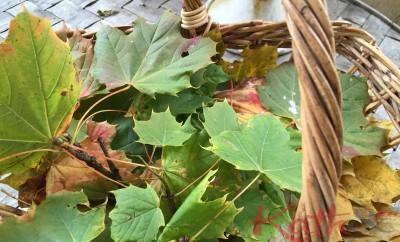 panier de feuilles mortes
